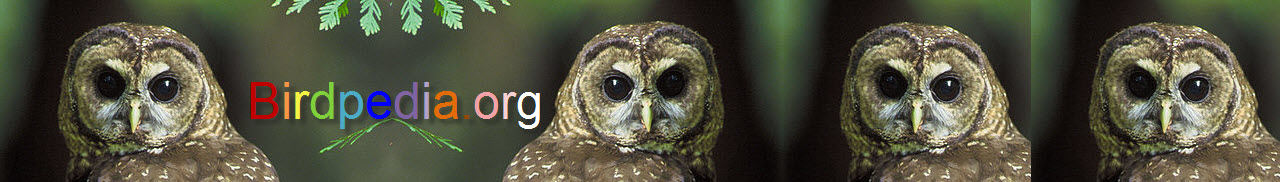 Northern Spotted Owl banner3.jpg
